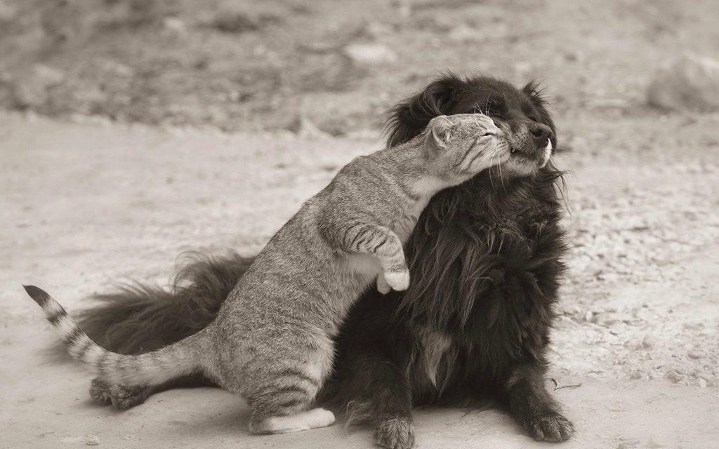 bigpreview_Cat Embraces a Dog