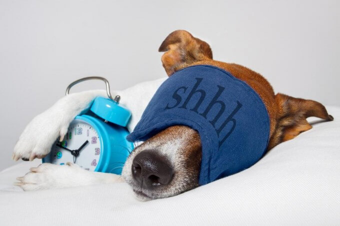 dog_with_alarm_clock-680x453